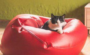 Poltrona sacco per cani e gatti